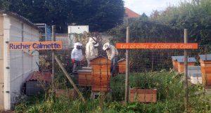 Apiculteurs au rucher Calmette